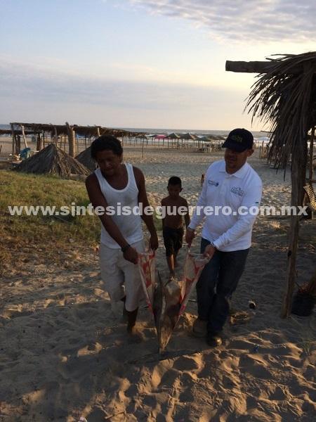 Atiende PROFEPA varamiento de tres delfines en playa Bonfil de Acapulco, Guerrero