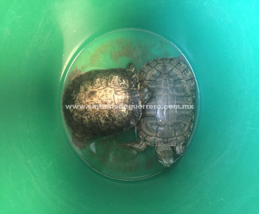 PROFEPA Recibe en resguardo 5 ejemplares de vida silvestre rescatados en Guerrero