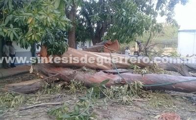 Muere aplastado por el tronco de un árbol en Tuxpan, Iguala