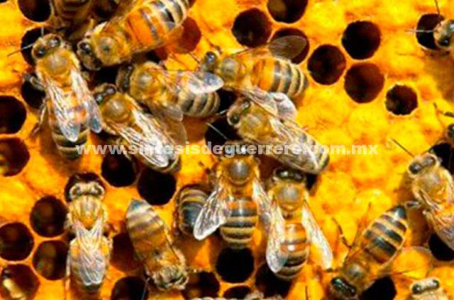 Las almendras dependen de las abejas y las abejas dependen de las almendras