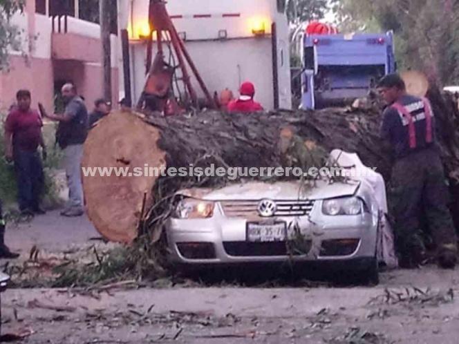 Cae árbol sobre un automóvil y mata a toda una familia