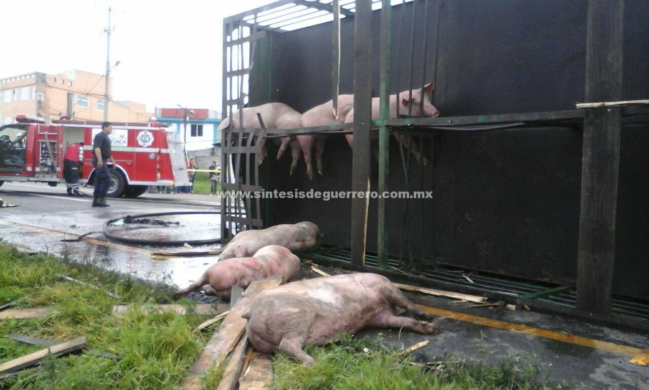 Choca un trailer cargado de cerdos contra autobus