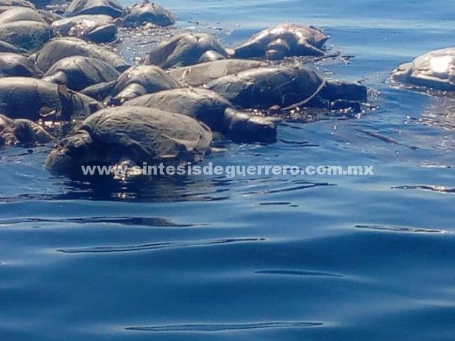 Profepa responsabiliza a pescadores locales por la muerte de tortugas en Oaxaca