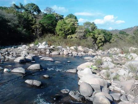 Denuncian deforestación masiva en la Sierra de Chilpancingo