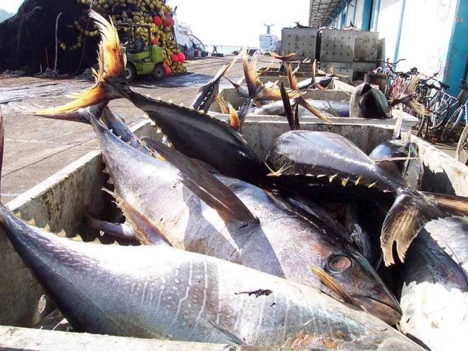 Alerta Profeco sobre marcas que ¡venden 'soya' por atún!