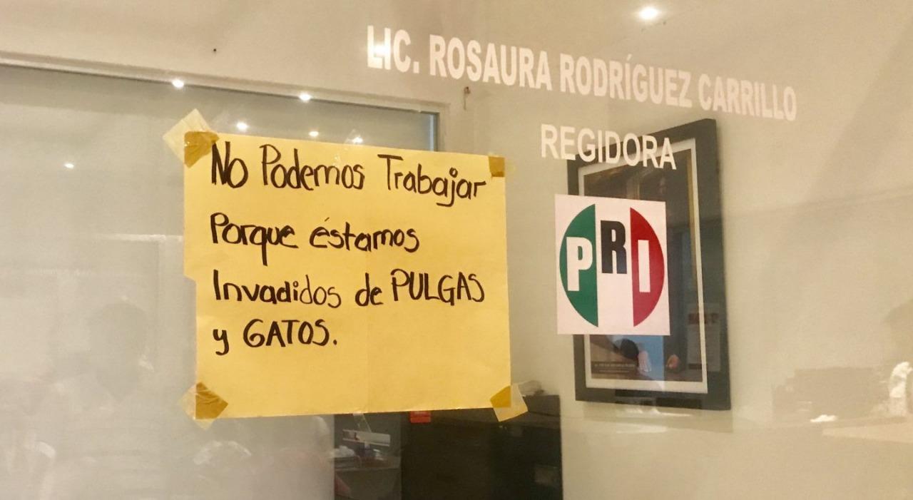 Regidores de Acapulco abandonan sala de cabildos por Plaga de pulgas