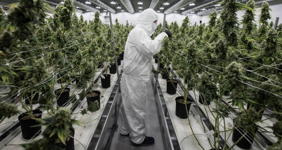 Lo más sensato legalizar la mariguana