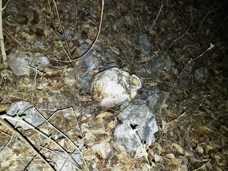 Hallan fosa común con cuatro cráneos y un embolsado en Tlapa, Guerrero