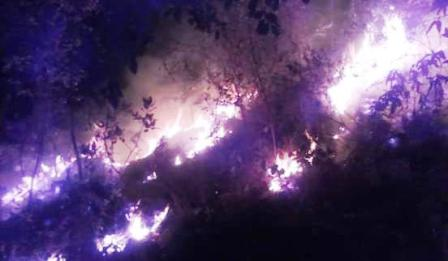 Incendio consume más de mil hectáreas en la Sierra de San Miguel Totolapan