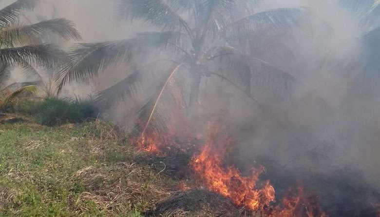 Devastan 3 incendios desde hace una semana la sierra de Atoyac