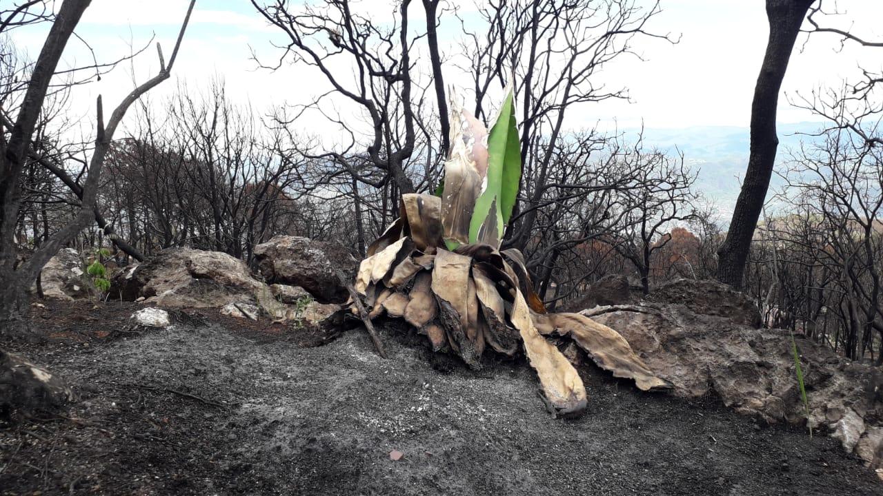 Mezcal artesanal, una tradición en peligro en Llanos de Tepoxtepec