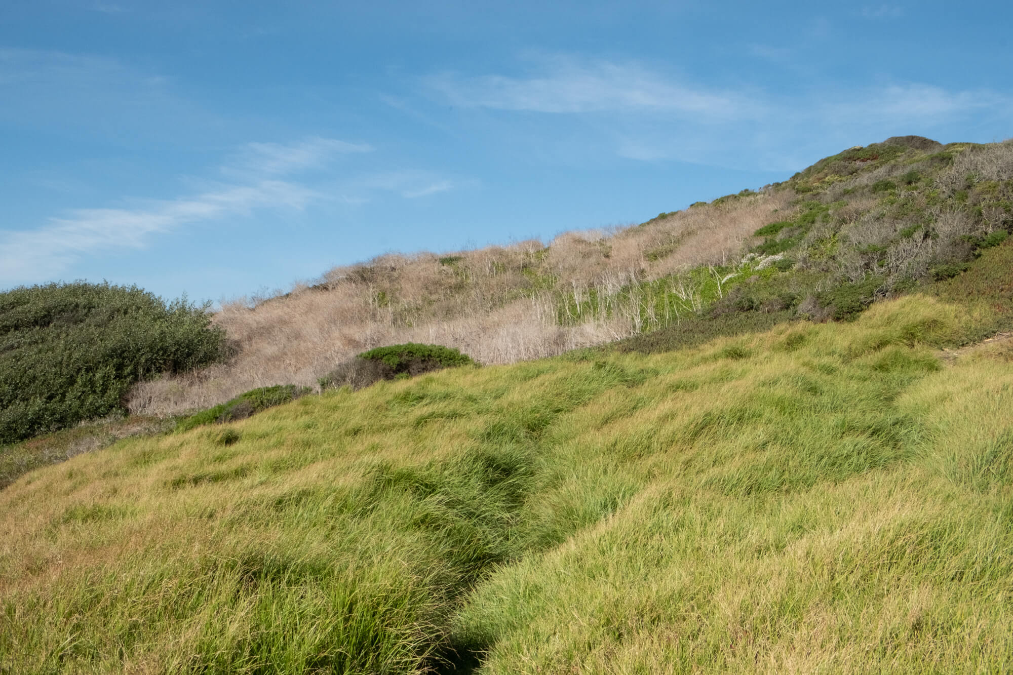 Grassy Knoll