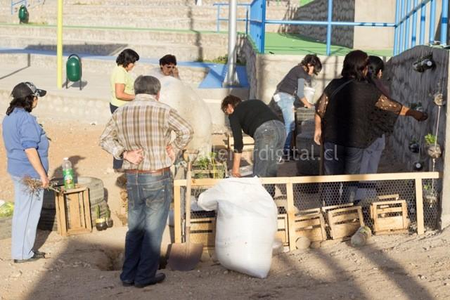 1er Huerto Comunitario en Vallenar (17)