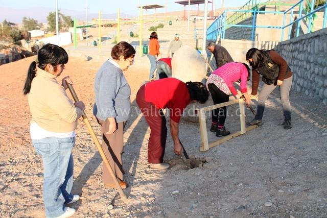 1er Huerto Comunitario en Vallenar (3)