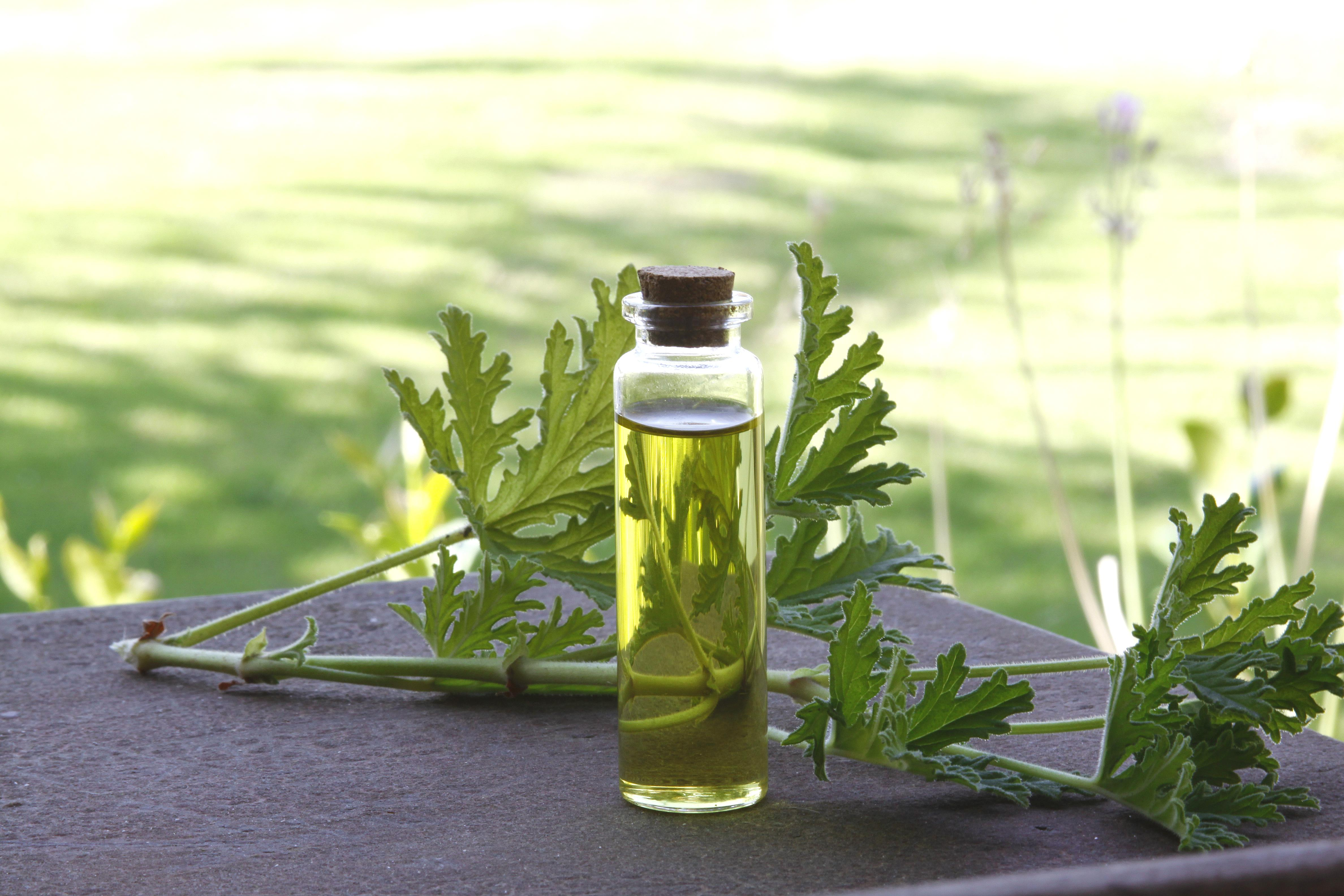 A tall, narrow jar with oil in it and a sprig of parsley behind it