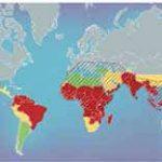Nobel per la medicina: vince la cura contro la malaria