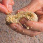 Calamari ripieni alle erbe aromatiche: la ricetta illustrata