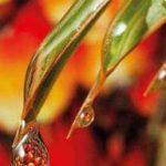 L'olio palma fa male al nostro organismo? Il parere dell'esperta