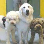 Pet therapy, è vero che gli animali fanno bene alla salute?