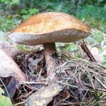 Consigli per andare per funghi in tutta sicurezza
