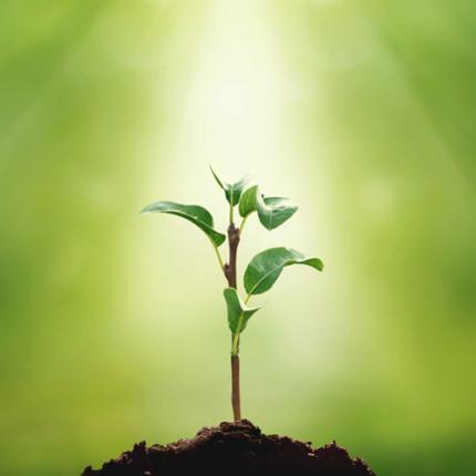 O que é empreendedorismo sustentável
