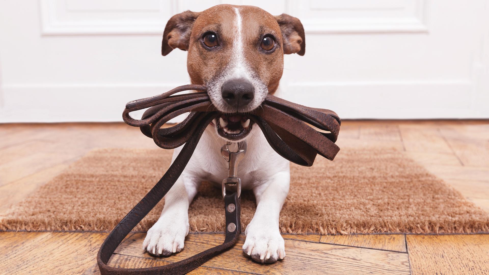 Negócios ganham mercado com propostas inusitadas para pets