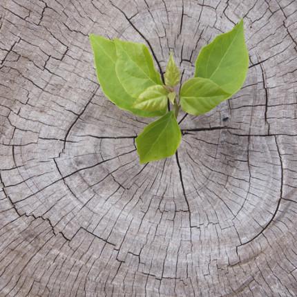 O sucesso é uma semente que nasce dentro de você – por Sandro Magaldi