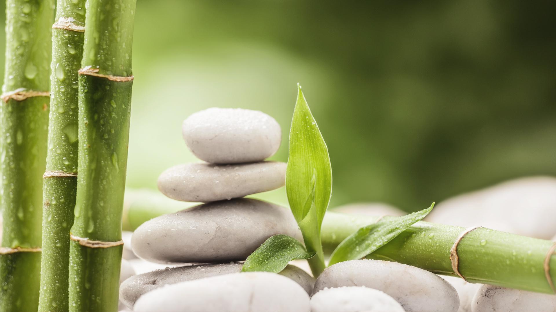 Resiliência: aprendendo a ser mais resistente que o bambu