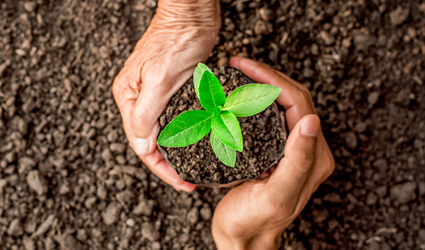 A sustentabilidade na mira dos jovens