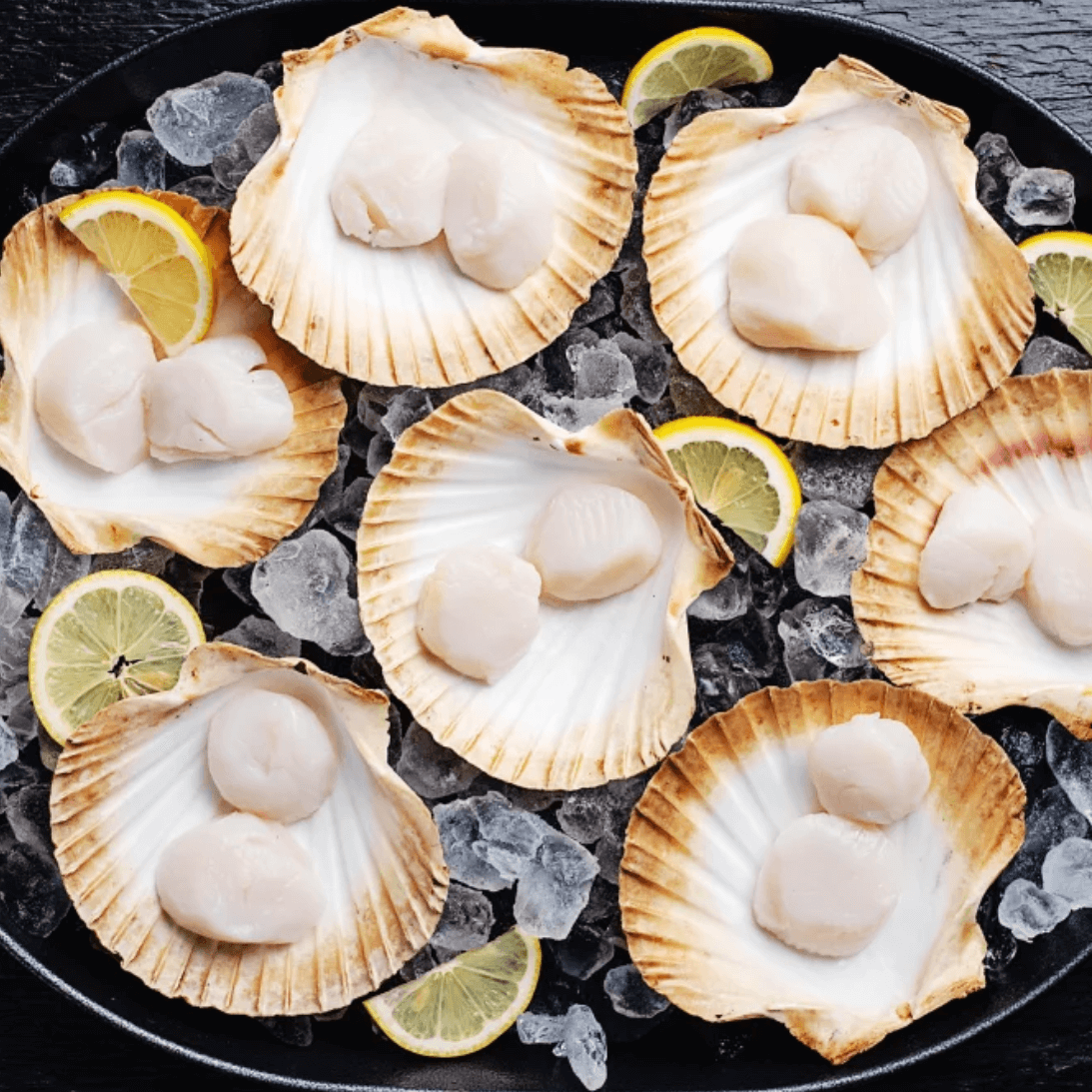 Goodfood sustainably caught wild scallops in shell on ice