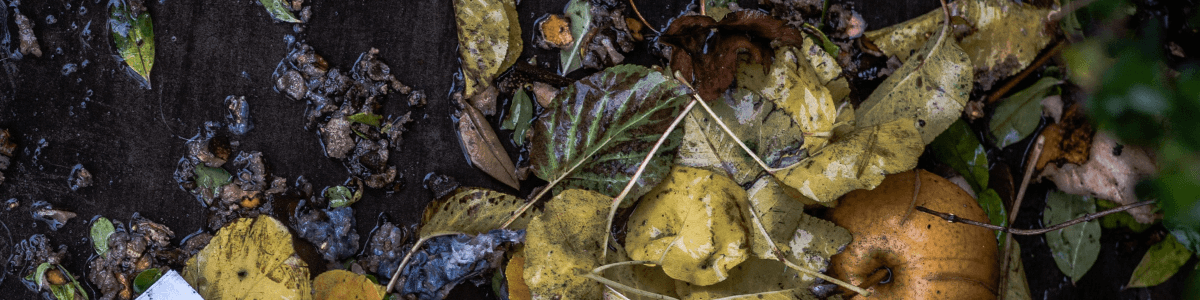 Unsplash image of compost