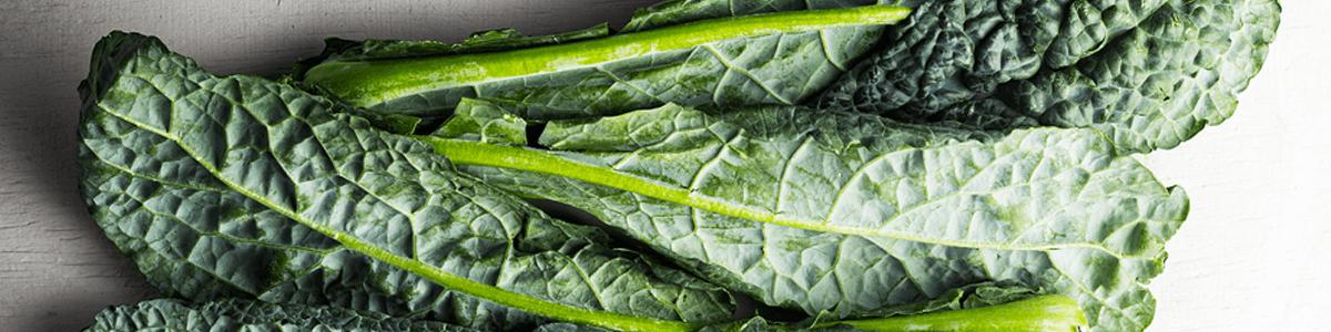 Fresh leaves of lacinato kale