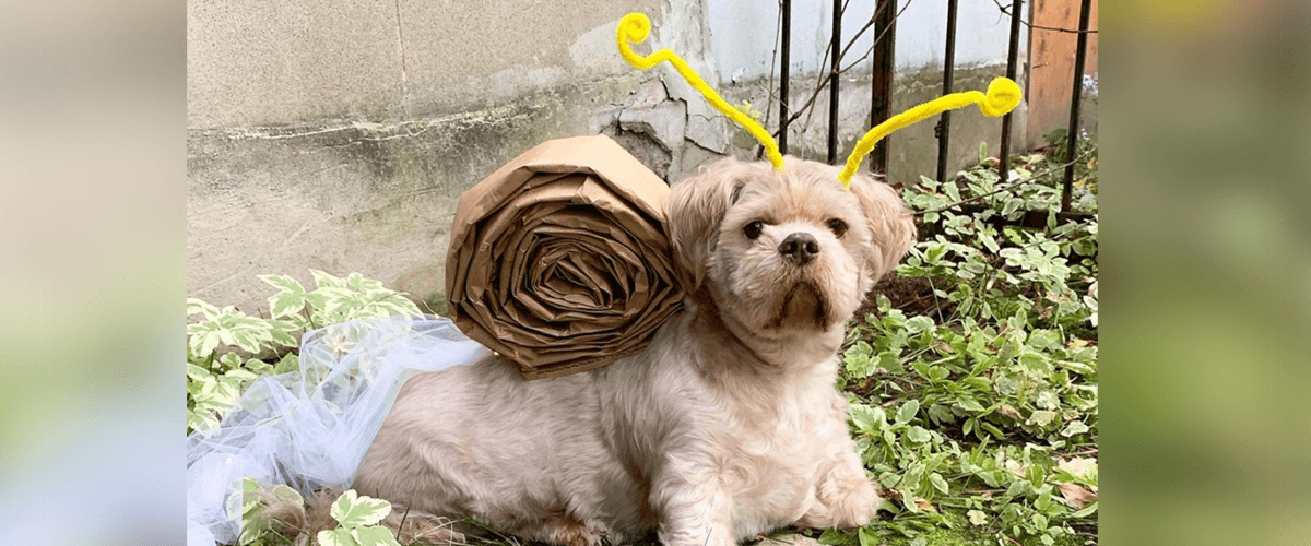 Dog snail costume made with Goodfood WOW paper bags and pipe cleaners.