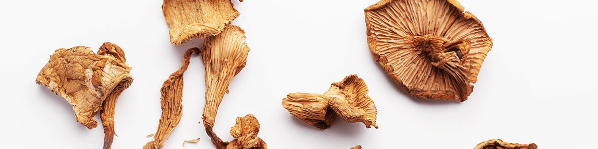Dried Chanterelle