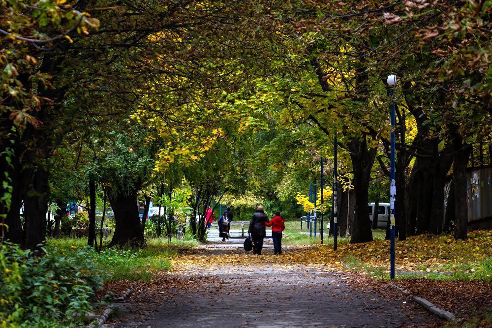 Осенний Тополь Днепр
