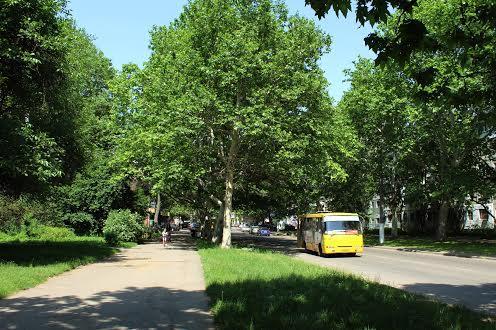 Черёмушки Одесса летом