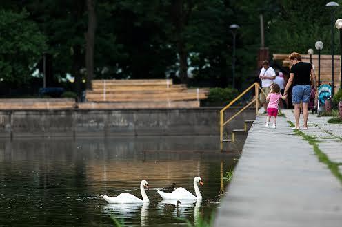 Лебеди на озере Левандовка