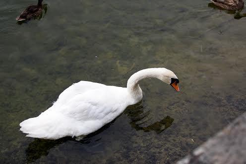 Озеро Левандовка во Львове