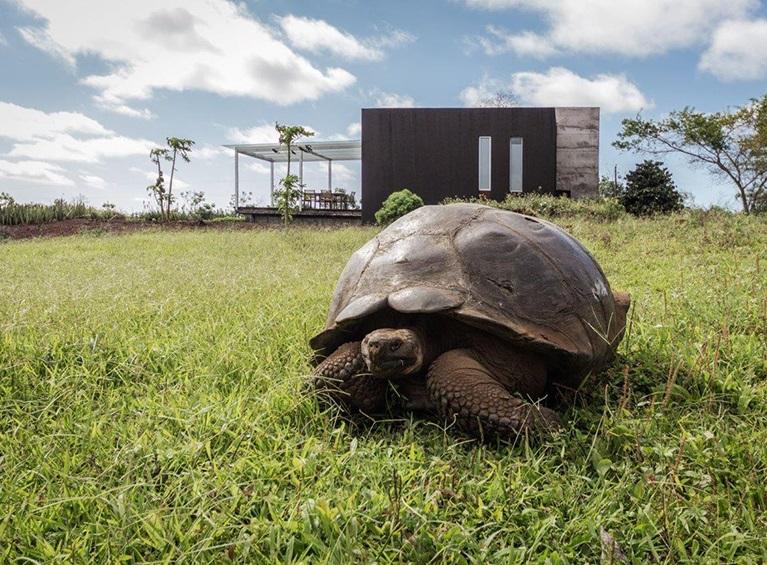 Montemar Eco Luxury Villas Familia