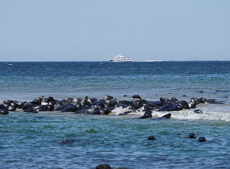 Tour por Galápagos en yate