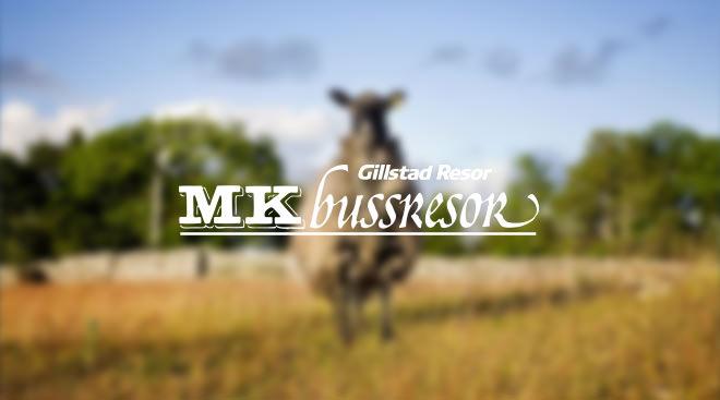 MK Bussresor Gotland Lamm