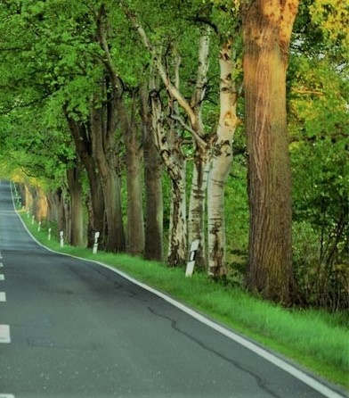 """<p><span style=""""color: rgb(34, 34, 34);"""">На участке дороги протяжностью в пятьдесят километров планируют заняться посадкой семнадцати тысячи деревьев, об этом было сообщено прессе пятнадцатого ноября в пятницу.</span></p><p>Посадка тысяч деревьев будет частью акции на юбилей великого поэта Насими Имадеддина за один день будет посажено шестьсот пятьдесят тысяч деревьев.</p><p>Сейчас будут проводится подготовочные работы к данной акции, уже была вспахана земля на этой территории, прорыли канавы и выкопали лунки, для посадки.</p><p> В планах Азербайджана провести массовою акцию связанною с посадкой деревьев во всем мире в честь юбилей одного из самых великих поэтов и мыслителей Насими, рассказал об этом министр экологии Фирдовси Алиев.</p><p>К Азербайджану присоединяться и страны зарубежья, где свои дипломатические миссии имеет Азербайджанская Республика. Министерство экологии уже направило обращения в министерство иностранных дел для того чтоб привлечь к этой акции как можно больше посольств.</p>"""