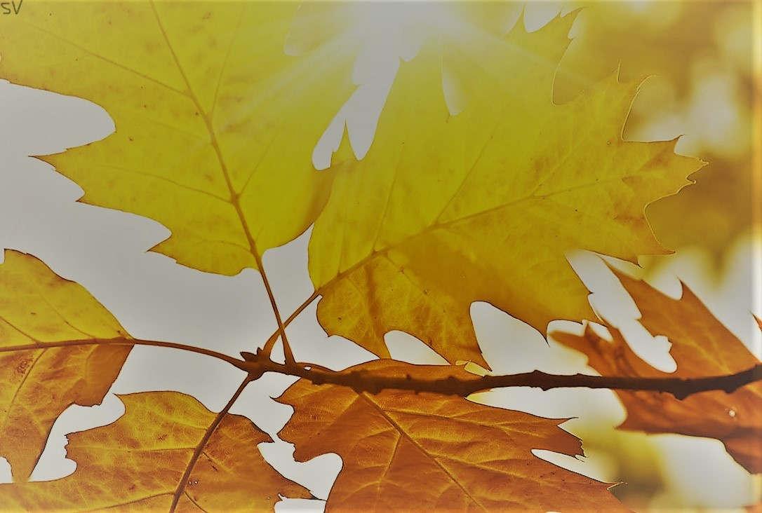 <p>Прогноз синоптиков: в столице и на полуострове Абшерон в течении дня семнадцатого ноября будет облачная переменная погода даже время от времени будет пасмурно, осадков можно не ожидать. В парочке мест может быть туман, ветер будет дуть с севера и с востока. Столбики термометров поднимутся в столице и на Абшероне в ночи от шести до девяти градусов, а днем от двенадцати до четырнадцати градусов цельсия. Давление в атмосфере будет составлять семьсот семьдесят пять мм ртутного столбика, влажность в воздухе будет составлять в ночи от семидесяти до восьмидесяти процентов, а днем от шестидесяти до шестидесяти пяти процентов.</p><p>По региону Азербайджана также не прогнозируют осадков. в ночи и по утру в некоторых местах прогнозируется туман, ветер будет дуть с востока. Столбики термометров поднимутся в ночи от четырех до девяти, а днем от одиннадцати до шестнадцати градусов цельсия. В горах в ночи от минус трех градусов до плюс двух градусов цельсия, а днем составит от трех до восьми градусов тепла.</p>