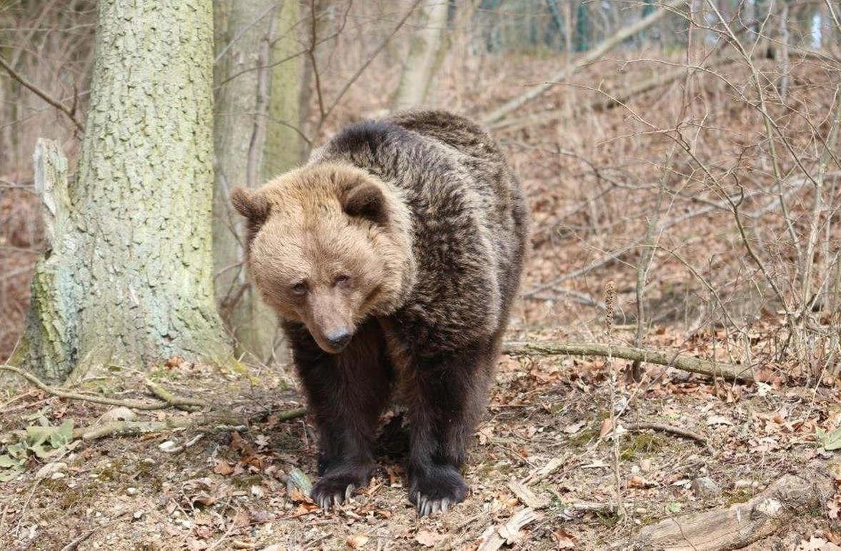 """<p><strong style=""""color: rgb(240, 102, 102);""""><em>Als ich den Park besuchte, sah ich sofort 4 Bären, einer von ihnen war stark und die anderen drei in der Ferne. Dieser Park kann von Bedeutung sein, wenn Sie den ganzen Tag warten müssen, bis die Bären auftauchen. Wenn Sie nur ein oder zwei Stunden Zeit haben, sollten Sie Glück haben. Im Allgemeinen ist dieser Ort für mich sehr interessant und informativ geworden. Da man nicht jeden Tag die Vedmedees sieht)</em></strong><strong style=""""color: rgb(92, 0, 0);"""">🐻</strong><strong style=""""color: rgb(0, 97, 0);"""">🐻</strong><strong style=""""color: rgb(102, 163, 224);"""">🐻</strong></p>"""