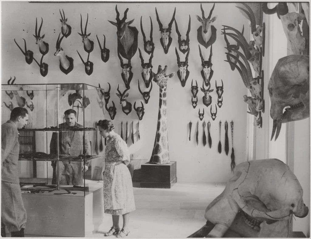 """<p>Matador ist zurück. Das Deutsche Jagd- und Fischereimuseum (DJFM) brachte die in Ostpreußen vom Reichsgergermeister German Goering erschossenen umstrittenen Hörner aus dem Lager. Während die Trophäe seit Jahrzehnten ohne Kommentar an der Wand hängt, ist sie nun Teil der Ausstellung, in der die nationalsozialistischen Grundlagen des Hauses entwickelt werden.</p><p><br></p><p><strong>Natur, Heimat, deutscher Wald: Elemente der NS-Zeit</strong></p><p><br></p><p>Die Jagd als Symbol der Macht ist unbestreitbar. Schon in der Antike und im Mittelalter zeigten Eliten, vor allem Männer, die Merkmale der Jagd. Insbesondere der Nationalsozialismus entdeckte den Schutz von Natur und Tieren als Propagandainstrument. Natur, Mutterland und deutscher Wald wurden beliebte Elemente der nationalsozialistischen Ideologie.</p><p><br></p><p><strong>16. Oktober 1938: Eröffnung des Jagdmuseums in München</strong></p><p><br></p><p>Bereits am 26. April 1934 nahm Weber das Museum auf die Tagesordnung der Sitzung des Münchner Hauptausschusses auf.Der ein Jahr zuvor ernannte neue Bürgermeister Karl Filer unterstützte Webers Museumsprojekt.</p><p><br></p><p>Schließlich wurde der Orangerietrakt im Nordflügel des Schlosses Nymphenburg einschließlich des Hubertussaals als Standort gewählt.Am 16. Oktober 1938 wurde das Jagdmuseum bis zum Abschluss der Bauarbeiten mit großer Fantasie und einer Prozession durch die Stadt eröffnet.</p><p><br></p><p><strong>Nach Kritik: Das Museum hängt heimlich NS-Trophäen auf</strong></p><p><br></p><p>Später stellte Göring der Sammlung eine Reihe von Exponaten zur Verfügung. Die drei zweifelhaft bekannten Hirschhörner """"Odin"""", """"Augustus"""" und """"Matador"""" aus Rominter-Heide gehören eigentlich einem Kriegsverbrecher, aber das Jagdmuseum hat sie nicht von Göring selbst erhalten.</p><p><br></p><p>Nach massiver öffentlicher Kritik stellte das Museum 2014 heimlich Nazi-Trophäen aus. Es wurde eine Broschüre zum Thema entwickelt und eine Studie in Auftrag gegeben. Mit einer Da"""