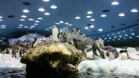 """<p><strong style=""""color: rgb(230, 0, 0);"""">¡Es difícil encontrar las palabras para describir este lugar! Este es un zoológico al aire libre, estos son rincones de varios lugares de nuestro planeta ... ¡Vale la pena un iceberg artificial con pingüinos! Una completa sensación de libertad, los animales son cómodos, espaciosos, casi en casa.</strong></p>"""