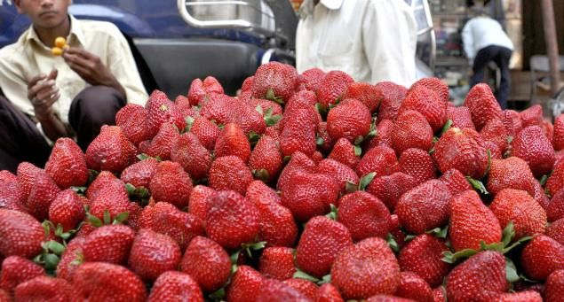<p>Maharashtra is home to different fruits and also called as a land of Strawberries. Pune starts receiving its first batch of Strawberries and the unseasonal rain seems to have an effect on it.</p><p>Balasaheb Billare who is the head of the Strawberry Growers' Association of Maharashtra said that the unseasonal rain is affecting both the quality and the quantity of the strawberry.</p><p>The Cafes, Bakeries and fruit Mandies are all full with their strawberry sell, 200 grams of strawberry is being sold at Rs 50 and the fruit vendors are making a good profit doing it.</p><p>Maharashtra is known as the place that is known for strawberries, and Pune, being loaded with bistros and pastry shops, is home to various food bloggers who are no different from the adoration this city has for strawberries.</p><p><br></p>