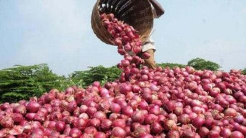<p>With less availability of Indian origin onions in the market, the Central government had decided to import it from Egypt and Turkey. The government imported 1.2 lakh tonnes of Onions.</p><p>Around 120 tonnes of imported onions reached the Shree Shiva Chhatrapati Market Yard of Pune but within days the onions were turned down by the traders since it does match the taste and look of Indian origin onion.</p><p>The price of Indian onion is touching the sky with Rs 150 per Kg and the imported onion price was Rs 60 per Kg. The imported onions had no takers in the market and thus they all had to return back.</p><p>Restaurant owners found it unsuitable for making gravies and other food items and thus they refused to touch the imported onions.</p>