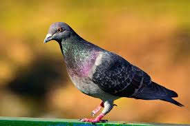 <p>A pigeon from Pakistan has disturbed Indian investigative agencies. Two days ago this pigeon came from Pakistan.</p>