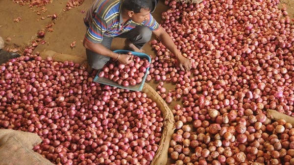 """<p>In the midst of shooting costs, Delhi Chief Minister Arvind Kejriwal said Delhi government will begin selling onions at ₹23.9 per kg from Saturday. """"One individual can get most extreme 5 kg onions for their family,"""" said Kejriwal. This, while the states have been approached to send their necessities to the Union Consumer Affairs Ministry on the off chance that they are confronting any deficiencies, IANS revealed. """"The interest for any amount will be satisfied promptly,"""" tweeted Consumer Affairs Minister Ram Vilas Paswan.&nbsp;</p><p><br></p><p>""""To increase onion supplies to the business sectors, a group of two joint secretary-level officials has been sent to Maharashtra to converse with the ranchers, dealers, and transporters to evaluate the accessibility of onions and to induce them to carry more onions to the market,"""" Paswan said in a progression of tweets.&nbsp;</p><p><br></p><p>Haryana, Andhra Pradesh, Delhi, Tripura, and Odisha are accounted for to have requested onions from the Center. """"Nafed sent 10 trucks of onions to Haryana yesterday and another 5 trucks are being sent today according to their interest. The Delhi government has likewise requested 4 trucks of onions Saturday onwards and these are being made accessible to them,"""" the tweet included.</p>"""